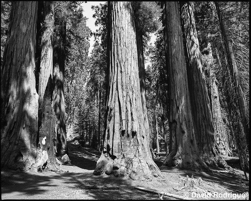 Sequoia, CA